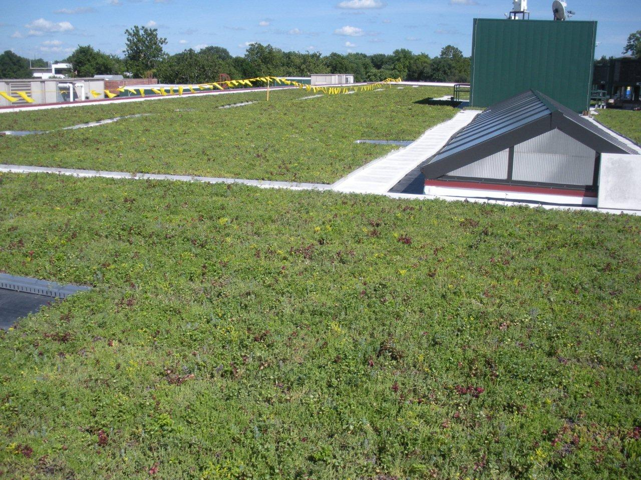 Illinois Department of Agriculture Vegetated Roof by LiveRoof